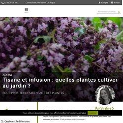 Tisane et infusion : quelles plantes cultiver au jardin - Promesse de Fleurs - Promesse de Fleurs