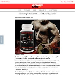 Essential Ingredients of A Good Fat Burner Supplement – Dynamism Labs
