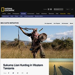 Halting Lion Hunting Information, Facts, News -