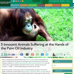 5 Innocent Animals Suffering at the Hands of the Palm Oil Industry
