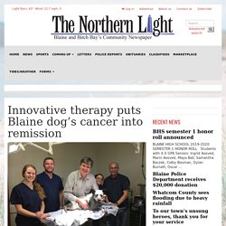 Innovative therapy puts Blaine dog's cancer into remission (T-cell therapy)
