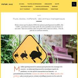 Fluos, écolos, inoffensifs : des animaux transgéniques