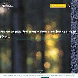 Arbres en plus, forêts en moins : l'inquiétant plan de l'État… - ASPAS - Réserves Vie Sauvage®