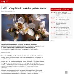 L'ONU s'inquiète du sort des pollinisateurs