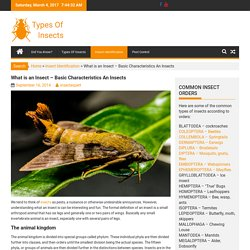 What is an Insect – Basic Characteristics An Insects