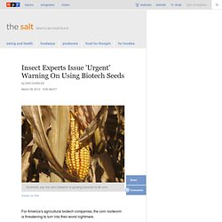 Insect Experts Issue 'Urgent' Warning On Using Biotech Seeds : The Salt
