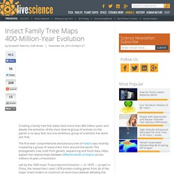 Insect Family Tree Maps 400-Million-Year Evolution
