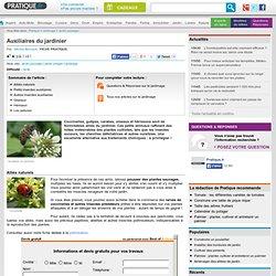 Insectes au jardin : les auxiliaires du jardinier - Jardin potager - Jardinage