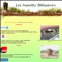 les insectes bâtisseurs: presse1
