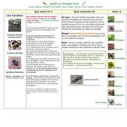 Les insectes des jardins pearltrees for Au jardin by les amis