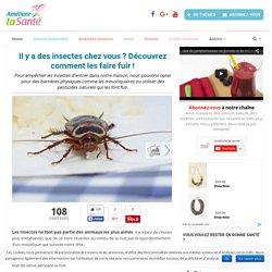 Il y a des insectes chez vous ? Découvrez comment les faire fuir