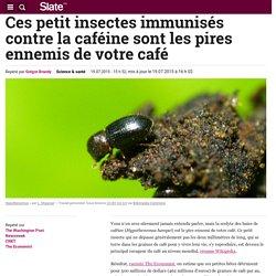 SLATE 19/07/15 Ces petit insectes immunisés contre la caféine sont les pires ennemis de votre café