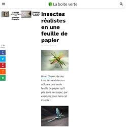 Insectes réalistes en une feuille de papier