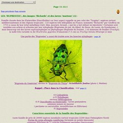 INSECTES11-14-1