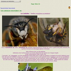 INSECTES18ter-32