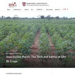 Insecticidal Plants: The Tech and Safety of GM Bt Crops - Science in the News