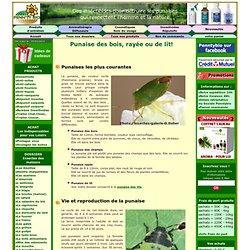 Un insecticide Bio 100% efficace sur la punaise