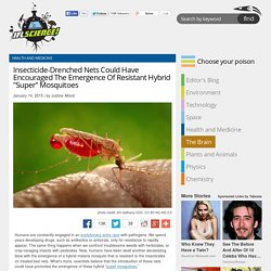 Insecticide-Drenched Nets Could Have Encouraged The Emergence Of Resistant Hy...
