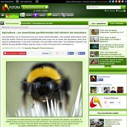 Apiculture : un insecticide pyréthrinoïde fait rétrécir les bourdons