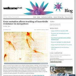 BLOG WELLCOME TRUST PERSPECTIVE 25/02/14 Gene mutation allows tracking of insecticide resistance in mosquitoes