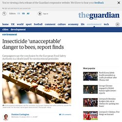Insecticide 'unacceptable' danger to bees, report finds