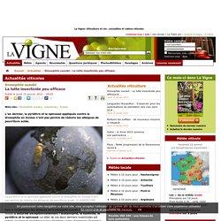 LA VIGNE 15/01/15 Drosophile suzukii La lutte insecticide peu efficace