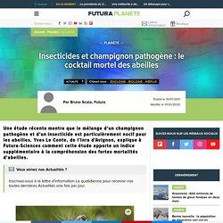 Insecticides et champignon pathogène : le cocktail mortel des abeilles