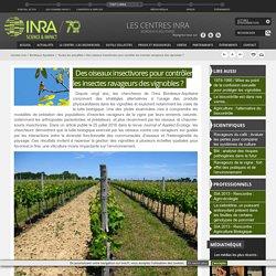 INRA 11/10/16 Des oiseaux insectivores pour contrôler les insectes ravageurs des vignobles ?