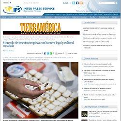 Mercado de insectos tropieza con barrera legal y cultural española