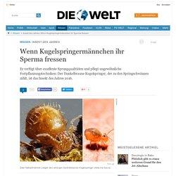 rem Erkenntnis berechtigt nicht zum SichÜberordnen Insekt des Jahres: Wenn Kugelspringermännchen ihr Sperma fressen