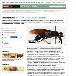 Insektenfund: Riesen-Wespe verblüfft Forscher - SPIEGEL ONLINE - Nachrichten - Wissenschaft