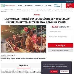 STOP au projet insensé d'une usine géante de presque 65.000 pauvres poulettes à Becordel Becourt dans la Somme !...