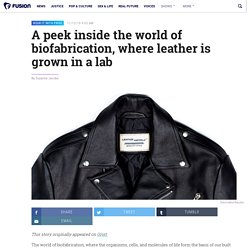 A peek inside the world of biofabrication, where leather is grown in a lab