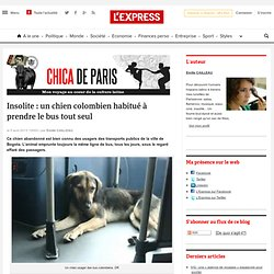 Insolite : un chien colombien habitué à prendre le bus tout seul