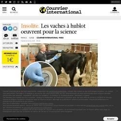INSOLITE. Les vaches à hublot oeuvrent pour la science