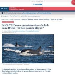 INSOLITE Deux orques observées en baie de Saint-Brieuc : Ce n'est pas une blague !