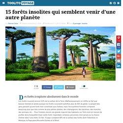 15 forêts insolites qui semblent venir d'une autre planète
