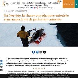 ONE VOICE 04/04/20 En Norvège, la chasse aux phoques autorisée sans inspecteurs de protection animale !