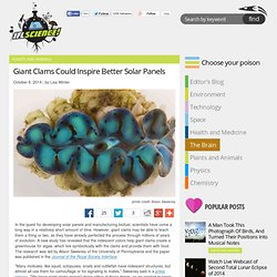 Giant Clams Could Inspire Better Solar Panels