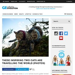These Inspiring Two Cats Are Travelling The World (PHOTOS)