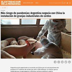 Más riesgo de pandemias: Argentina negocia con China la instalación de granjas industriales de cerdos - El Extremo Sur