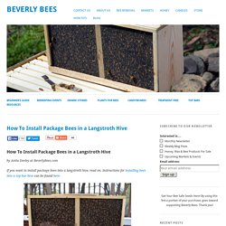 How To Install Package Bees in a Langstroth Hive - Beverly Bees