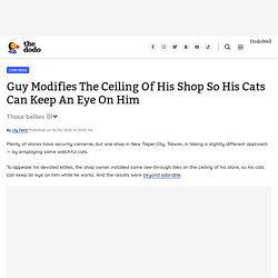 Guy Modifies The Ceiling Of His Shop So His Cats Can Keep An Eye On Him