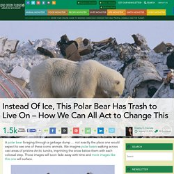 Instead Of Ice, This Polar Bear Has Trash to Live On – How We Can All Act to Change This