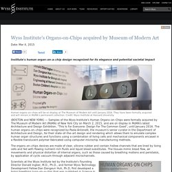 Wyss Institute's Organs-on-Chips acquired by Museum of Modern Art