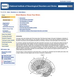 Brain Basics: Know Your Brain: National Institute of Neurological Disorders and Stroke (NINDS)