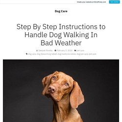 Step By Step Instructions to Handle Dog Walking In Bad Weather – Dog Care
