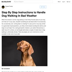 Step By Step Instructions to Handle Dog Walking In Bad Weather