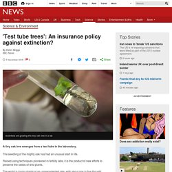 'Test tube trees': An insurance policy against extinction?
