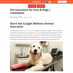 Pet Insurance For Cats & Dogs